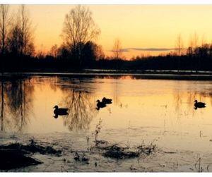 5 апреля начинается весенняя охота в Курской области