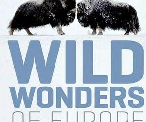 Рекордное увеличение популяции диких животных в Европе