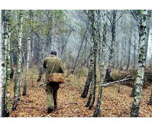 Французы  и не только блуждают в наших лесах без Сусанина