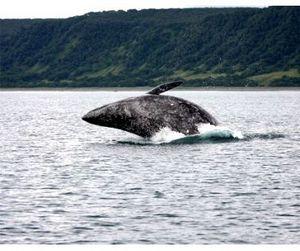 Чукотские китобои открыли сезон