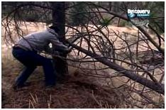 Навес-шалаш из упавшего дерева