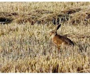 Начинается охотничий сезон в Воронежской области