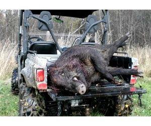 Новые правила охоты на кабана насторожили охотников