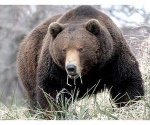 Камчатские лимиты на охоту - самые щедрые