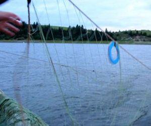 Браконьеры оставят Волгу без рыбы
