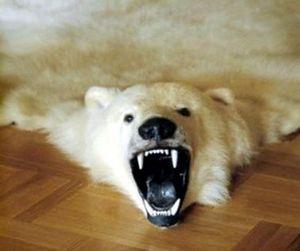 Все на защиту белых медведей
