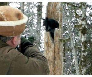 Гималайского медведя - в Красную книгу России!