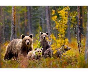 Охота на медведя в Башкирии запрещена