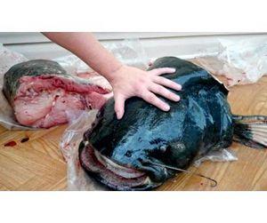 Житель Татарстана поймал сома-гиганта