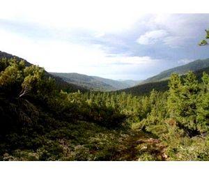 В Коми определились с лимитами на новый охотничий сезон