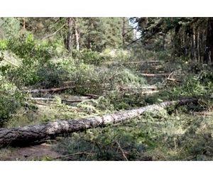 За прошедший год в Воронежской области выявлено 83 экологических преступления