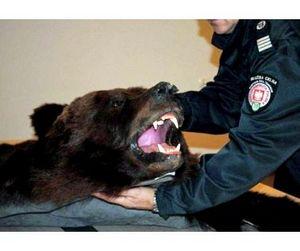 Мужчина украл из охотничьего магазина медвежью шкуру