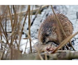 Продолжается сезон охоты в Омской области