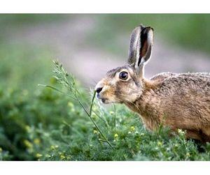 В Приволжье запрещена охота на зайцев