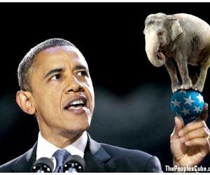 Президент США ввёл запрет на торговлю слоновой костью