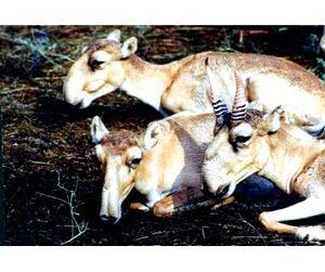 В новые правила охоты следует внести изменения