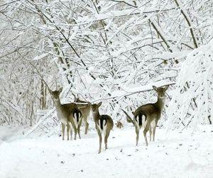 В Белгородской области с 1 ноября открыт сезон охоты на копытных