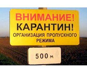 Вспышка АЧС в Ивановской области ликвидирована