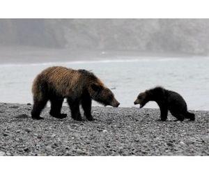 Охота на медведя на Сахалине