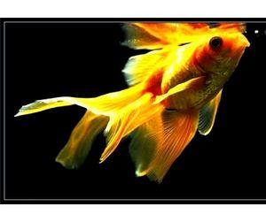 Конкурс красоты среди рыб прошел в Китае