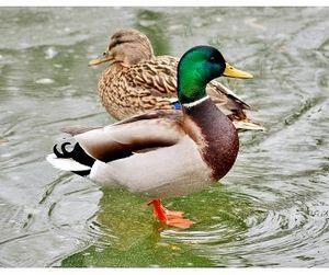 Птичья лихорадка в Липецкой области