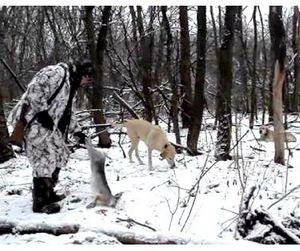 В Луганской области открыта охота на пушных