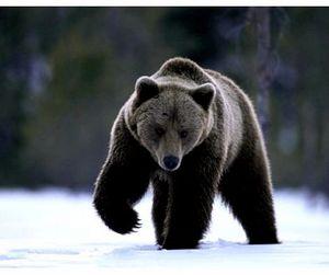 Весенняя охота на медведя в Амурской области