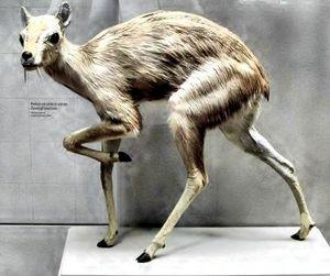 За отстрел ценных видов животных предлагают ужесточить наказание