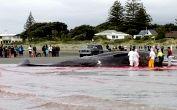 Кашалот покончил с собой на пляже в Новой Зеландии (фоторепортаж)