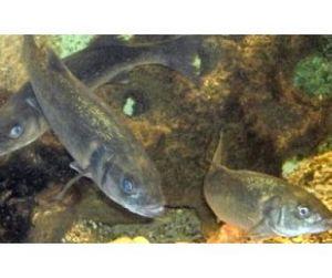 Зимовье рыб под охраной