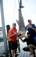 Как поймать акулу голыми руками?