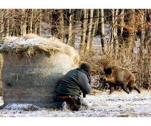 Омская область в ожидании начала охотничьего сезона