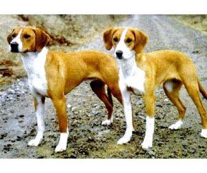 Кража редких щенков