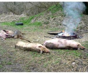 В Белоруссии ввели запрет на импорт свинины из России.
