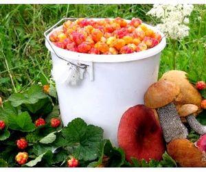 В Томской области жители могут потерять из-за неурожая грибов и ягод миллиард рублей