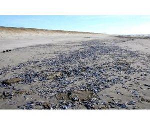 Массовая гибель рыбы произошла в Пензенской области