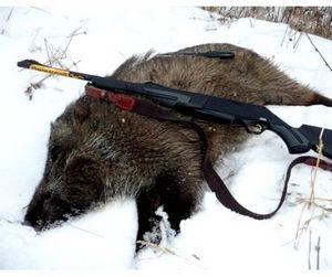 На Южном Урале сняты все ограничения на добычу кабана