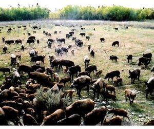 Охотники заплатят за порчу сельскохозяйственных посевов