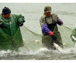 В Молдавии закрывается рыбный промысел