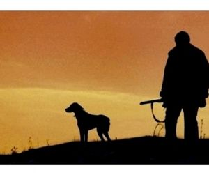 Простым охотникам отдадут 20% угодий в Тульской области