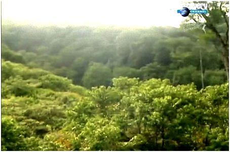 Ориентирование в джунглях