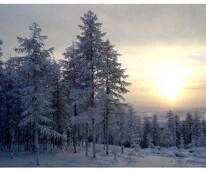 У  Якутских инспекторов охраны природы с января прибавится полномочий