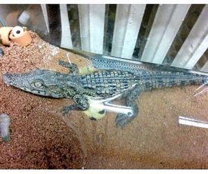 Детёныша нильского крокодила выбросили в мусор в Санкт-Петербурге