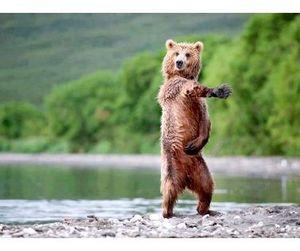 В Финляндии медведь отшлепал мужчину и убежал