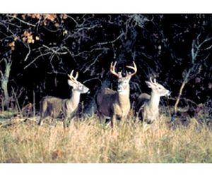 Вспышка заболевания оленей в Южной Дакоте