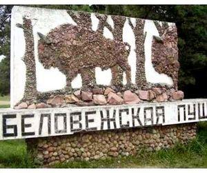 Беловежская пуща становится заповедником