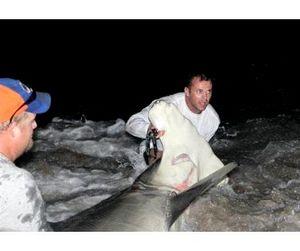 Житель Флориды изловил огромную акулу-молот