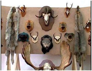 Монтаж охотничьих трофеев