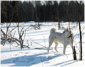 Как определить свежесть следов зимой?
