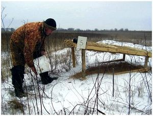 Зимняя подкормка диких животных